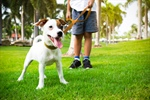 Walking the Dog, All the Way to Better Health